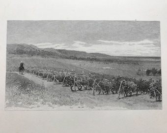 Old Lithograph of Vineyards in Adelaide Signed William Crothers Fitler (1857-1915)