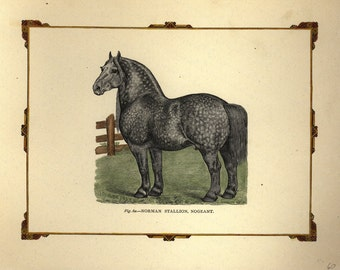 Antique Original Hand colored Engraving of Horse - THe Norman Stallion, Nogeant