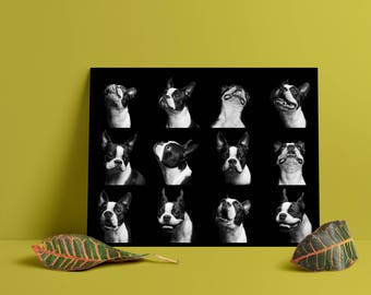 Boston Terrier Pup-emotion poster // wall print