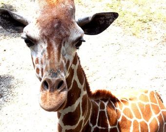 digital download, zoo, giraffe, home decor