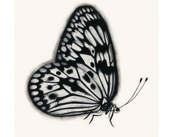 """Butterfly art print : Black and White Butterfly 4"""" X 6""""  print - 4 for 3 SALE"""