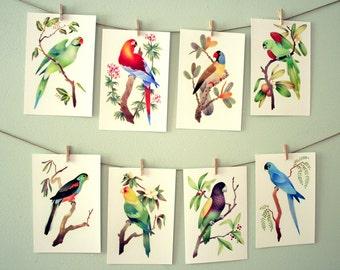 Parrot Colorful Art Prints – Full Set of 8 – Extinct Birds – 4x6 Print – Bird Lover Gift, Parrot Illustration