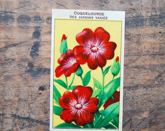 Original Vintage Flower Seed Label, Lithograph, French, Coquelourde, New Old Stock