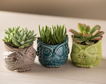 Succulent Owl Set of 3 - See Hear Say