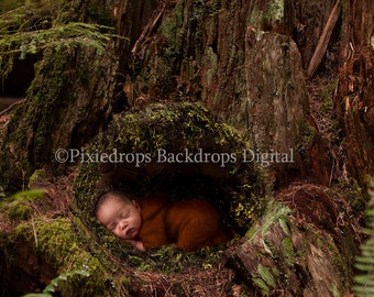 Newborn Digital Prop (Moss Covered Tree Stump with Moss Covered Basket Digital Backdrop)