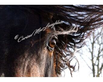 Seall dhomh/ Show me / Montre moi - Equine Fine Art Horse Photography - Cheval Etalon  Photographie d'Art