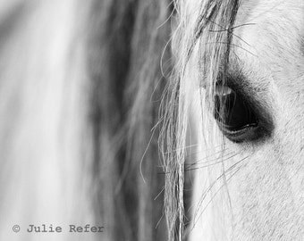 Horse Photography Black and White  Equestrian Fine Art