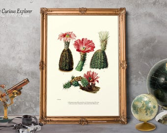 Cacti Wall Decor, Cactus Illustrations, Succulent Posters, Desert Kitchen Decor, Cacti Desert Art, Cactus Plant Prints - E8g64