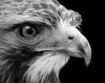 Bird of prey counted cross stitch kit