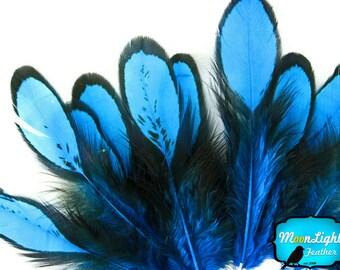Unique Blue Feathers, 1 Dozen - BLUE Laced Hen Loose Saddle Feather: 361