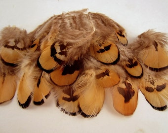 Natural Reeves Pheasant gold feathers length 2 to 3 inches feathers earrings crafts 24 k50