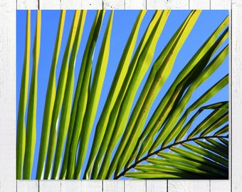 Tropical Leaf Print Photography | Large Minimalist Art | Blue Modern Beach Wall Art Print | Greenery Palm Frond Print | Tropical Palm Decor