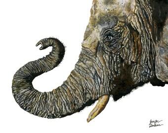 Art Print. Elephant Cyril. White Background