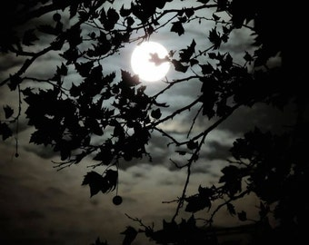 Tree and Moon Photograph - Full Moon - NY Night Sky -  Moonlight - Dog Walk On The Moon - Landscape - Rustic Wall Decor - Nature Photograph