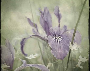 Iris Flower Photography, purple and green wall art, shabby chic inspired home decor, baby nursery, spring