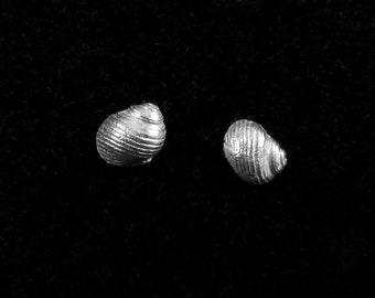 She sells sea shells                                                                             - silver shell stud earrings