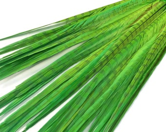 """Green Feathers, 10 Pieces - 20-22"""" LIME GREEN Long Ringneck Pheasant Tail Feathers : 4144"""