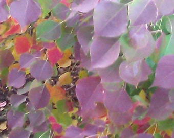 Colorful Leaves Phone Wallpaper