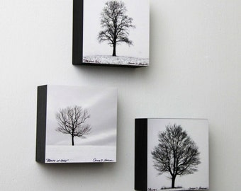 Black and White Lone Trees, Nature Photography, Winter Wall Art, Square Wood Panels, Shelf Art, Ready to Hang, Minimalist Wall Art