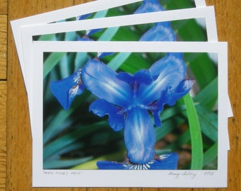 Mrs. Cooks Iris, 6 Karten