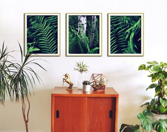Set of 3 Prints, Fern Art, Botanical Print Set, Fern Wall Art, Kitchen Decor, Retro Kitchen Art, Botanical Poster