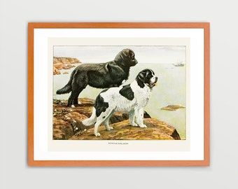 Newfoundland Dog Art Prints Victorian Illustration Vintage Prints Antique Nature Print Natural History Art