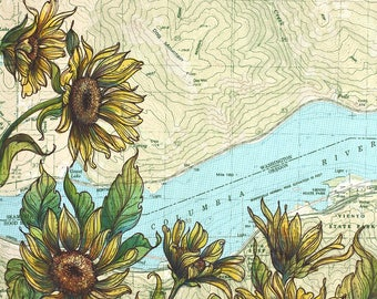 Dog Mountain art, Columbia River Gorge painting print flower illustration, Washington hiking print, arrowleaf balsamroot wildflower art