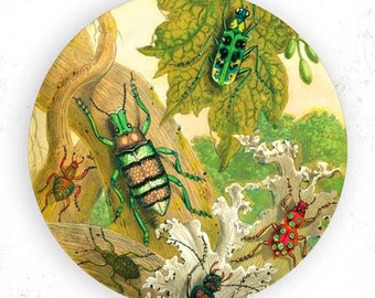 beetles, insects I plate