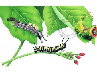 Children illustration - Caterpillars - art print of original artwork