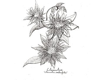 Clematis Print, Flower Art, Floral Botanical Print, Wall Art, Clematis Art, Flower Drawing, Botanical Flower Print, Black and White Flower