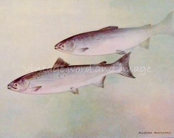 Atlantic Salmon Art Print 1924 Vintage Lithograph Home Office Fishermans Decor Hashime Murayama Watercolor Butter Fish Scup Porgy Book Plate