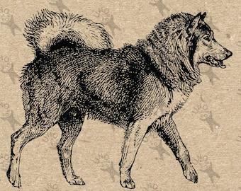 Vintage image Dog Husky Instant Download Digital printable clipart graphic Burlap Fabric Transfer Iron On  Decor T-shirt  HQ  300dpi