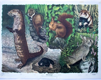 Small mammals, educational chart, wall chart, published by Offsetdruckerei Friecke&Co, 1951