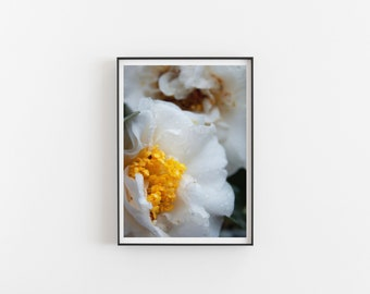 Two Camellia Flowers, Flower Print, Fine Art Print, Photography Print, Wall Art, Free Shipping, Flower Photography, Nature Art, Gift For Her