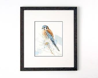 American Kestrel Original Watercolor Painting, Framed Bird Art