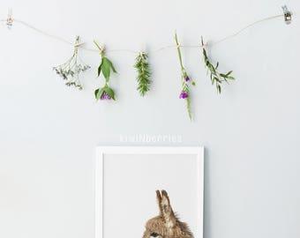 Baby donkey print - Nursery animals prints - Baby animals - Nursery decor - Gender neutral nursery art - Nursery wall art - Printable
