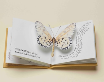 Butterflies - a limited edition handmade pop-up artists' book
