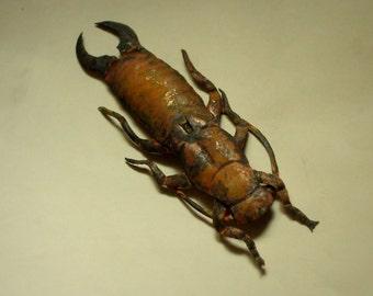 Earwig Sculpture, Garden Sculpture, Original Copper Art