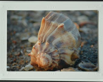 Shell in the Morning
