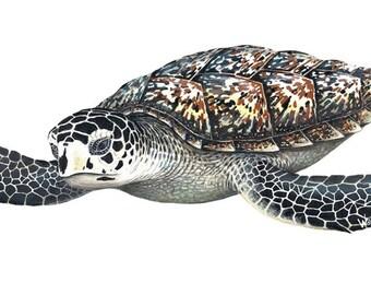 Sea Turtle Wall Decal
