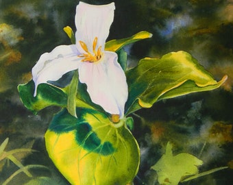 Montana wildflower, Trillium, watercolor