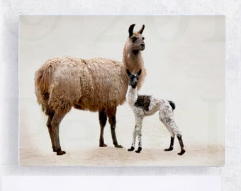 Animal Art - Llama Art - Nursery Art - Mother and Child - Llama Baby 5x7 Canvas Print on Art Block - Photograph - Kids Room Wall Decor