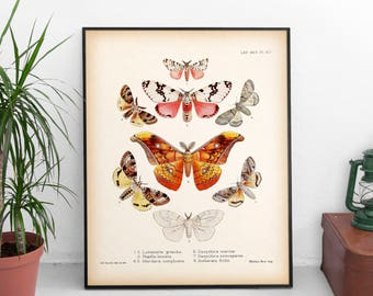 Instant download printable art, Butterfly print, Vintage insect print, Entomology, Home wall art, Butterfly wall art, 8x10, 11x14 prints