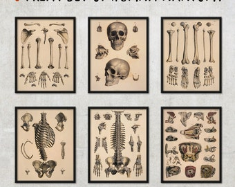 6 illustration set of human anatomy, wall decor, anatomy art print - FREE SHIPPING WORLDWIDE