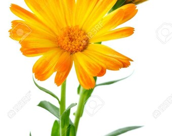 Calendula organic oil, Skin care, Baby oil