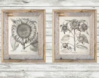 Vintage Sunflower Botanical Print Black and White Vintage Wall Art