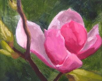 Sale! Magnolia Blossom - Original Oil Painting - Floral Still Life - 8x10