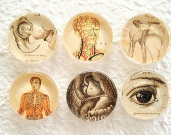 Anatomy 101 Magnet Set 2 RESERVED for Katinahat