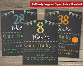 Printable Bi-Weekly Pregnancy Countdown, Pregnancy Chalkboard Sign, Baby Countdown, Weeks 8-40, Set of 17 Signs