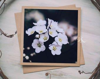 Floral Photo Card - Ninebark - Physocarpus opulifolius Diabolo